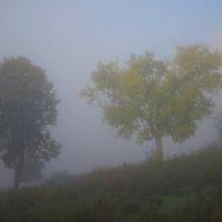 Туман :: Денис Матвеев