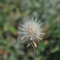 цветы :: Алексей Сердюк