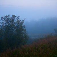 Вечерний туман :: Андрей Асеев