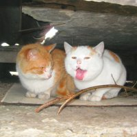 коты :: Вера Бабкова