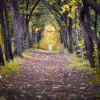 Ходит осень в нашем парке ... :: Maxxx©