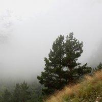 В облаке :: Светлана Попова