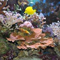 аквариумный пейзаж :: Юрий Соколов