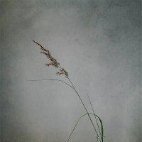 Одиночество :: Инна Ткаченко
