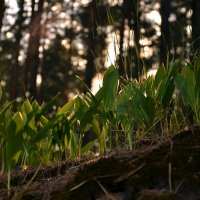 Весна в лесу :: Владимир