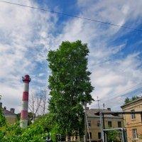 Нижний Новгород. Улица Таллинская. :: Павел Зюзин