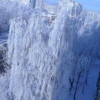 зима :: Славко Венгер
