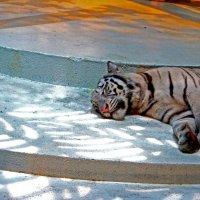 Белый тигр :: Ekaterina Ribnikova