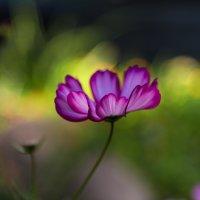 Цветик :: Dmitry Krasitsky