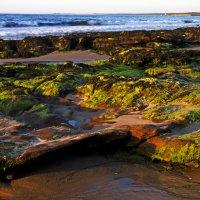 Отлив (Северное море, Шотландия) :: Олег Неугодников
