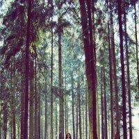 В лесу :: Катя Саленик