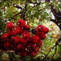Дождь #01 :: Павел Лунькин