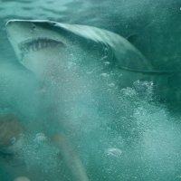 акула :: Алексей Михайлов