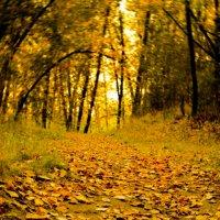 Autumn.. :: Katya Nike