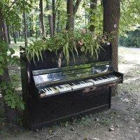 Рояль, ой, пианино, в кустах :: Елена Аксамит