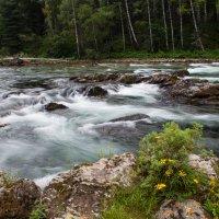 Алтай, река Кумир :: Тамара Гераськова