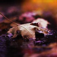 Осень в огне :: Nikolai Volobuev