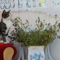 Котёнок :: Mariya laimite