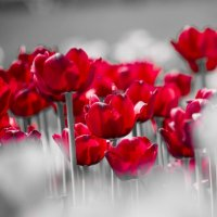 Цветочки :: Володя Левин