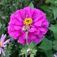 Цветы :: Виталий Митасов