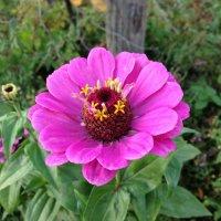 Цветы2 :: Виталий Митасов