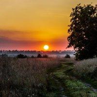 закат :: Андрей Муравьев