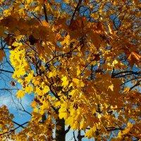 Осень :: Нина Рубан