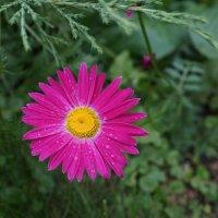 цветок :: tanya aleskina