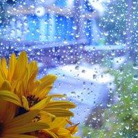 непогода нипочём :: Тася Тыжфотографиня