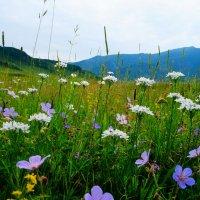 Цветули) :: Мария Данилова