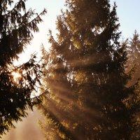 Утреннее солнце :: Рома Рекивчак