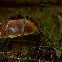 На грибы в Закарпатье :: Рома Рекивчак