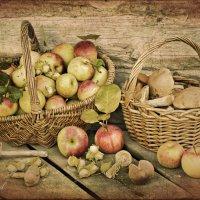 Натюрморт с орехами и грибами. :: Елена Kазак