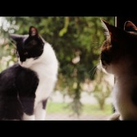 кошачья любовь :: Uliana Nezgodynska