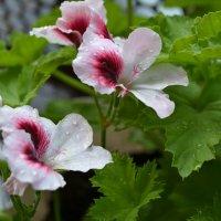 цветы :: Katerina Sheglova