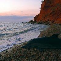 мертвый дельфин :: Маргарита Волк