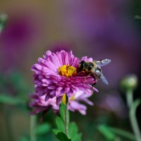 Цветы :: Виктор Филиппов