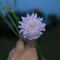 цветочек :: Natali Nikolash