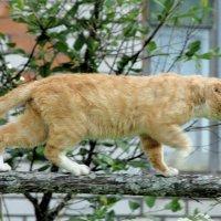 соседский кот на охоте :: Маргарита Башева