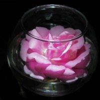роза в вазе :: Маргарита Башева