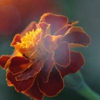 Цветок :: Александр Обердерфер