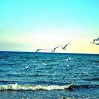 Море и чайки :: Екатерина Бондарь