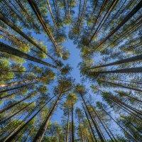 взгляд в небо :: Соня Орешковая (Евгения Муравская)