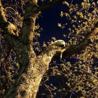 лунный кот  ... :: Роман Шершнев