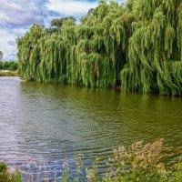 Есть в Графском парке старый пруд... :: Олег Косенко