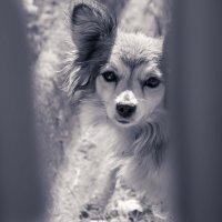 осторожно: злая собака=) :: Александр Тарасевич