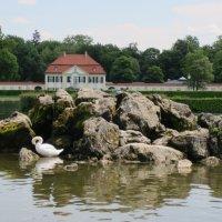Лебеди, Мюнхен 2011 :: Анна Глухова