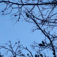луна в плену :: Елена Гусева