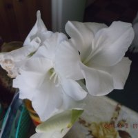 цветок :: Дмитрий Бердник