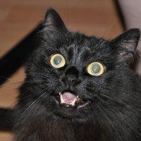 мой котейка :: Дмитрий Берсенев